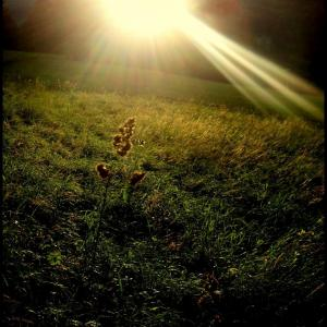 B11 Stéblo ve slunci