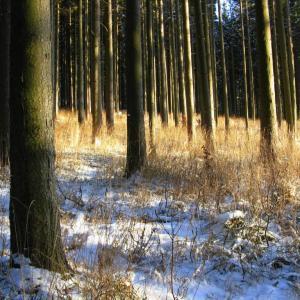 B108 poklad v lese
