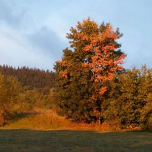 B161 Podzim pod Vysokou