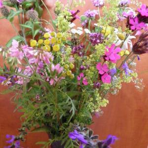 Květiny z horské louky (4)