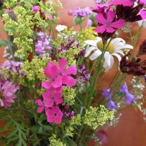 Květiny z horské louky (2)