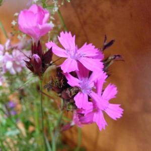 Květiny z horské louky (1)