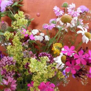 Květiny z horské louky (3)