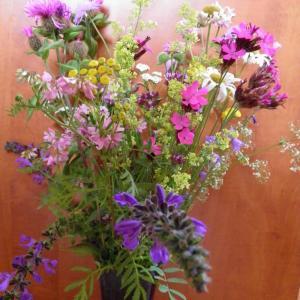 Květiny z horské louky (5)