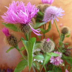 Květiny z horské louky (6)
