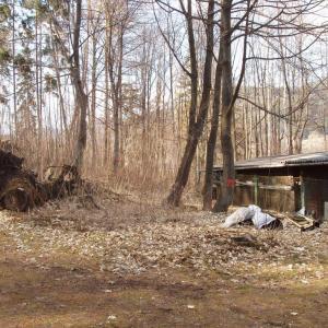Lesopark před obnovou