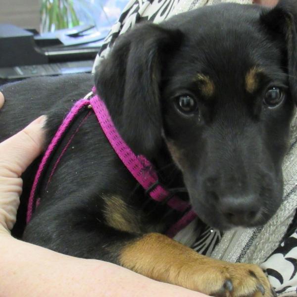 nalezené štěně 29122015, foto AK