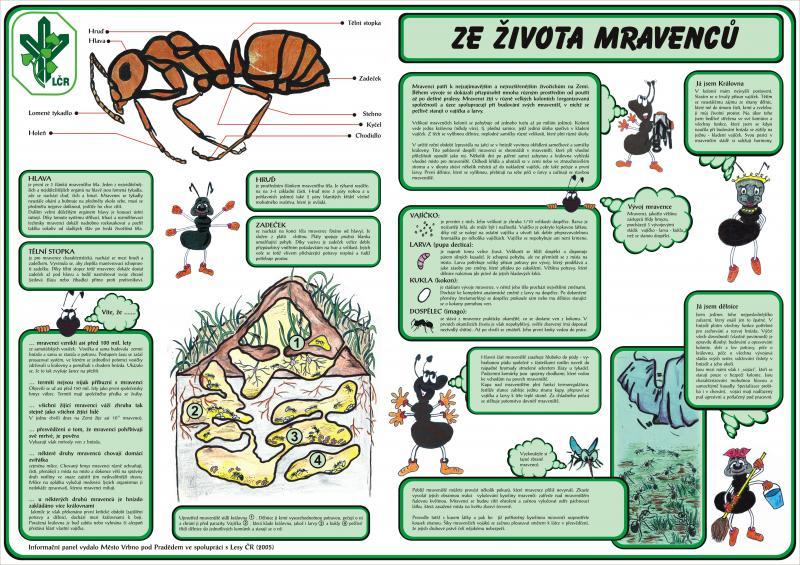 4 ze zivota mravencu, obrázek se otevře v novém okně